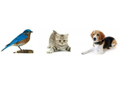 Discriminación de animales by Jessica Vera Nicolás