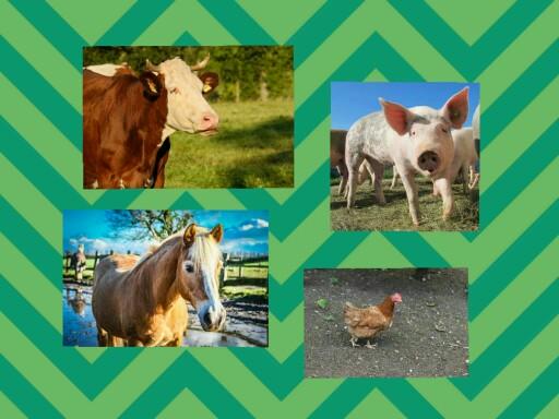 farm animals 1 by Ilona Obszańska
