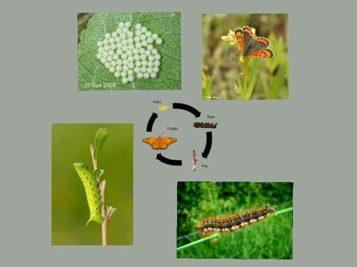 rupsen en vlinders by Lisa Snijders