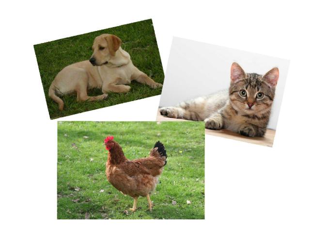 Vocabulario de animales by Belen García