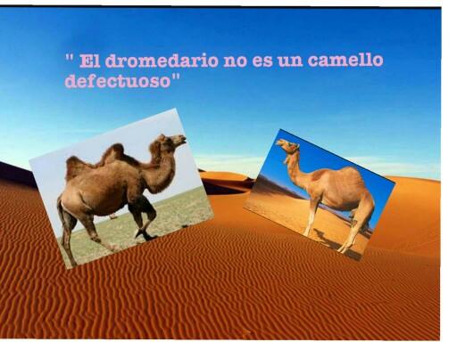 el dromedario no es un camello defectuoso by Maria Esteban