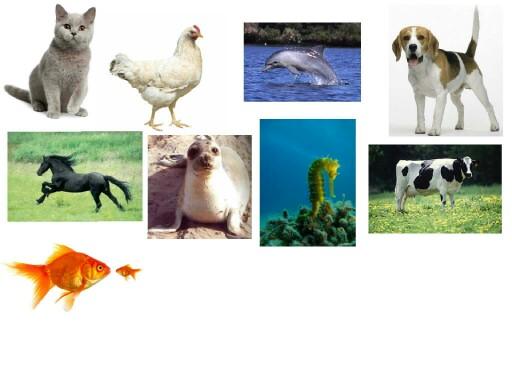 בעלי חיים by מירב מלול