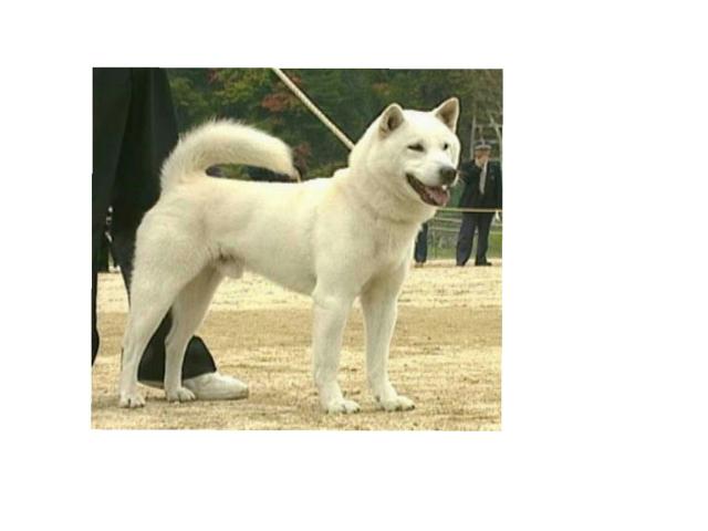 صورة الكلب نعمل عليها بازيل لتعليم الطفل اعضاء الكلب جميعها by سعاد مشعل