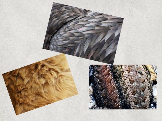 Animal Body Coverings  by ELIZABETH HARTUNG