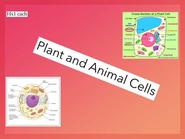 Animal Cells by hx1 cach