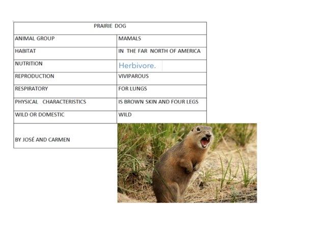 Animal Encyclopedia by Irene Arroyo