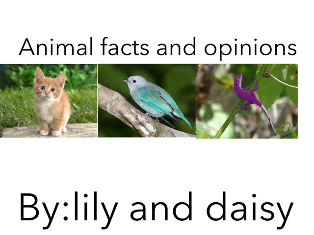 Animal Facts And Opinions by Jennifer Alexander