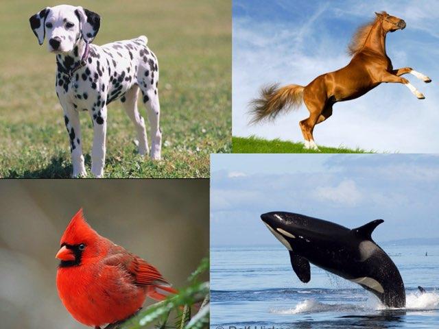 Animal Game by Gretchen Fackler