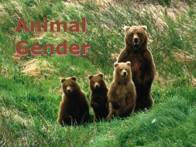Animal Genders by uri lazar