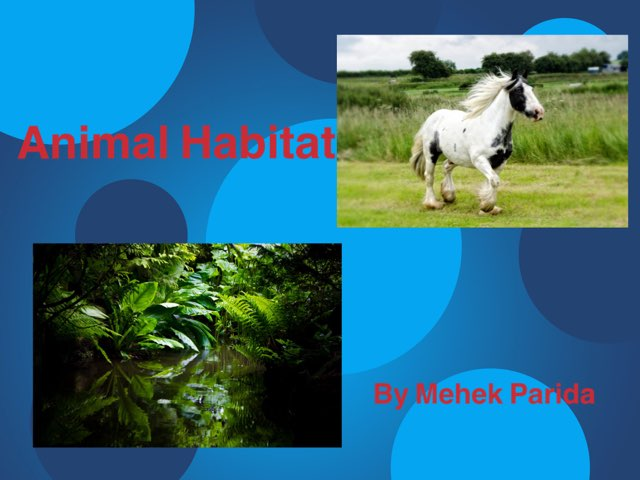 Animal Habitat by Nupur biswal