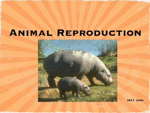 Animal Reproduction by hx1 joni