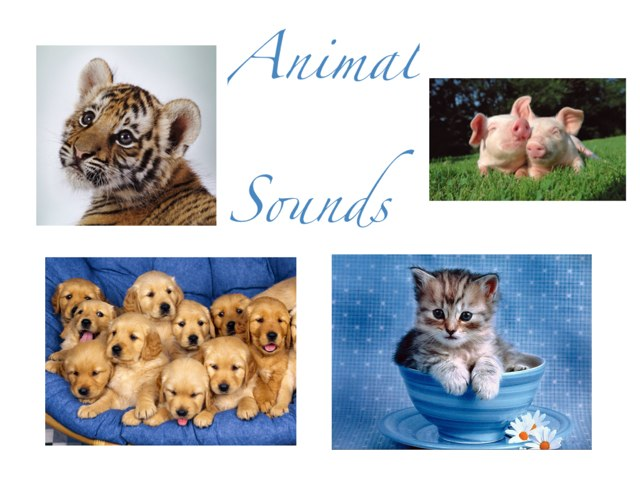 Animal Sounds by aisling Moore