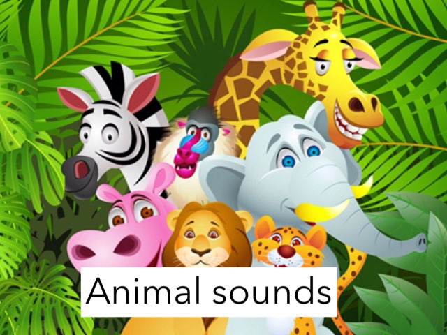 Animal Sounds by Amad meri