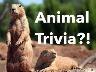 Animal Trivia by Trivia Blitz