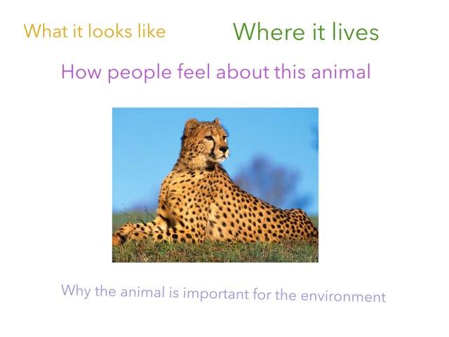Animal in the UAE by Eva Jay