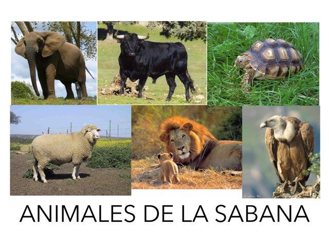 Animales De La Sabana by Enrique Blazquez rodríguez
