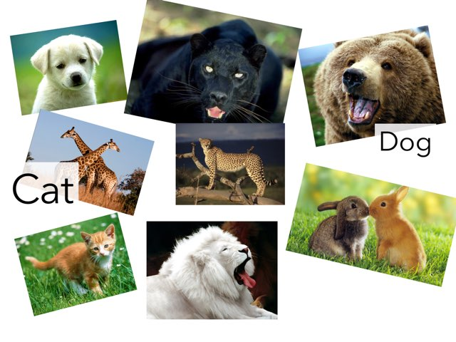 Animales by Curso CFTIC