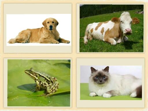 Animali by Coop AncoraServizi