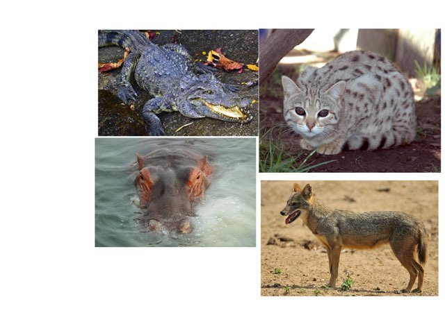 Animals 2 by Ian Eagleton