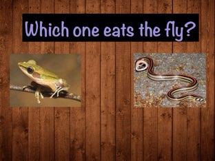 Animals Eat Which Animals by Roxy Davidson