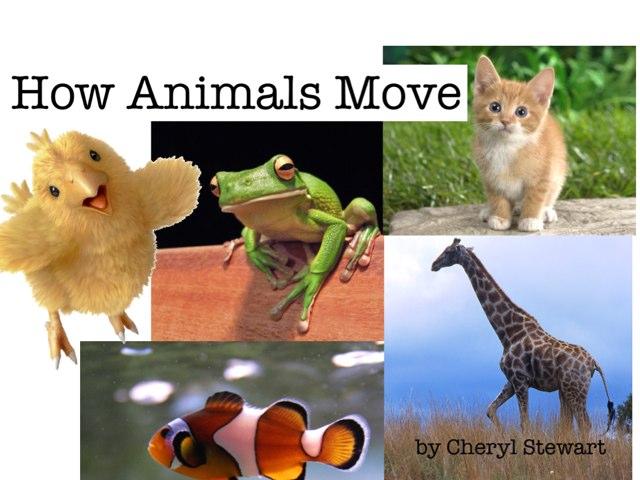 Animals Move by Cheryl Stewart