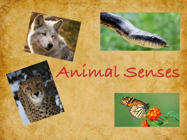 Animals Senses by Nupur biswal