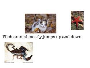 Animals  by Faith Shannon