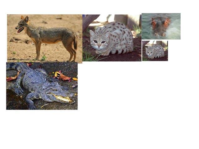 Animals by Ian Eagleton