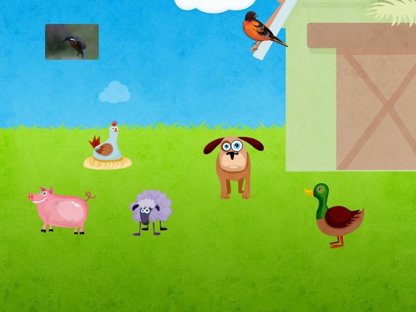 Animals by susanna barboni
