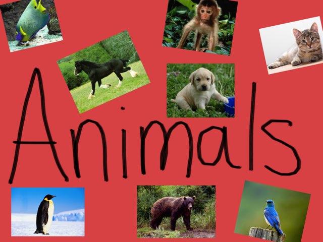 Animals by Emily Whalen