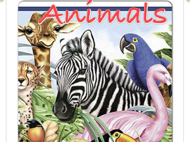 Animals by May Perdomo