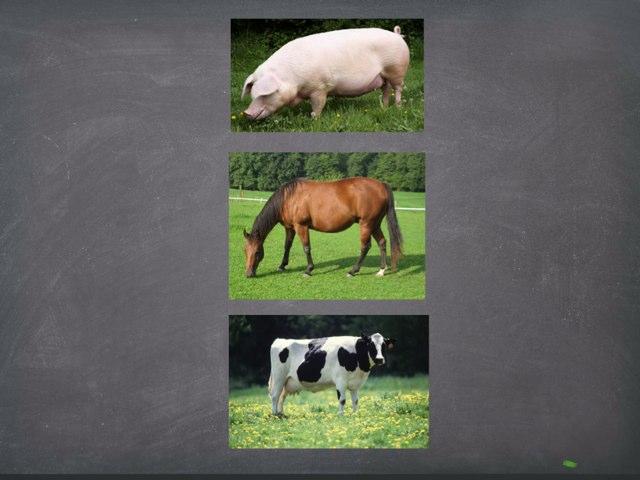 Animals by Erin Willis