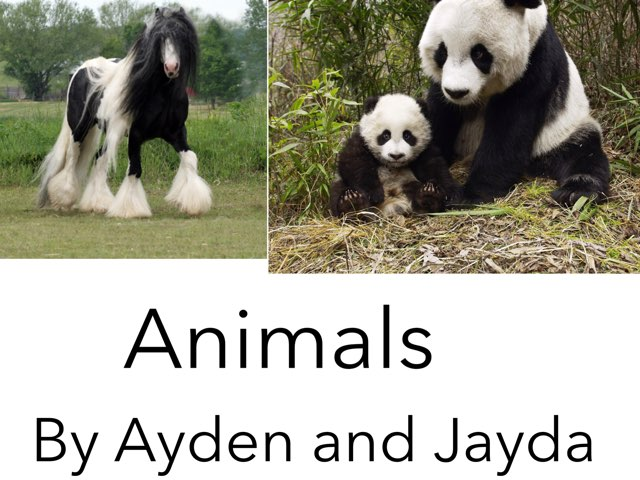 Animals by Jennifer Alexander