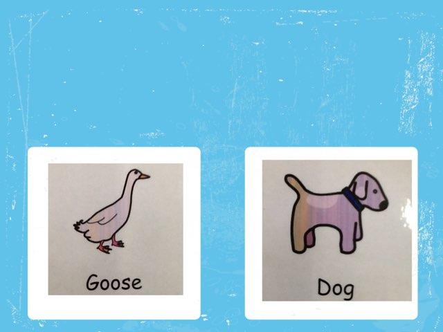 Animals by Beaufort school
