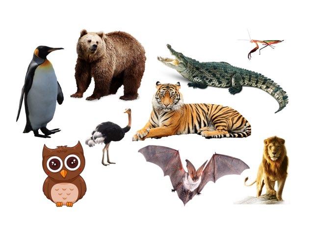 Animals by Katarzyna Góralczyk