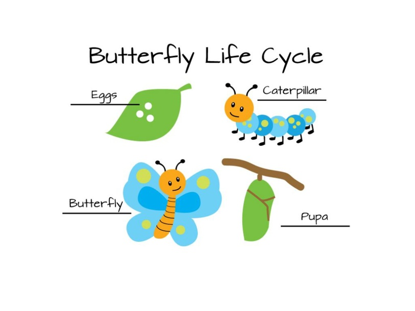 Answer questions about life cycle by Kristin Cresswell