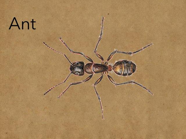 Ants by Luke Johnson