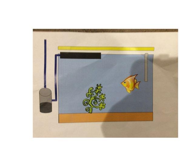 Aquarium Margot by Kevin Nouvel