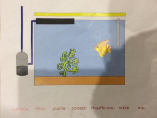 Aquarium Nora by Kevin Nouvel