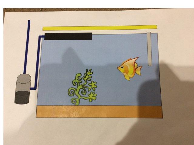 Aquarium Wren by Kevin Nouvel