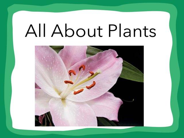 Arah Plants by Hulstrom 1st Grade