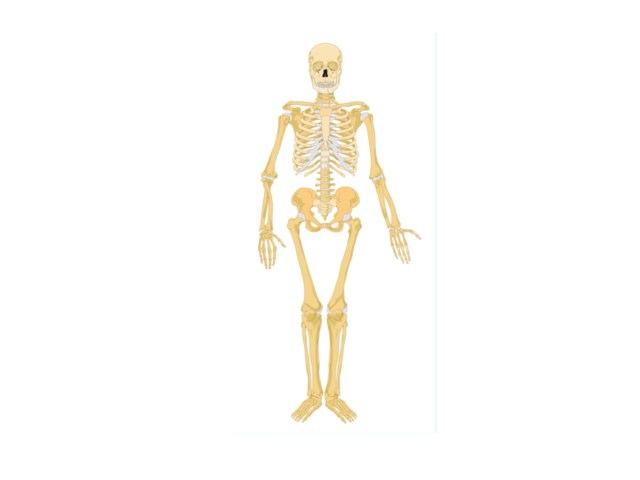 Archie Skeleton by Mr Parkinson