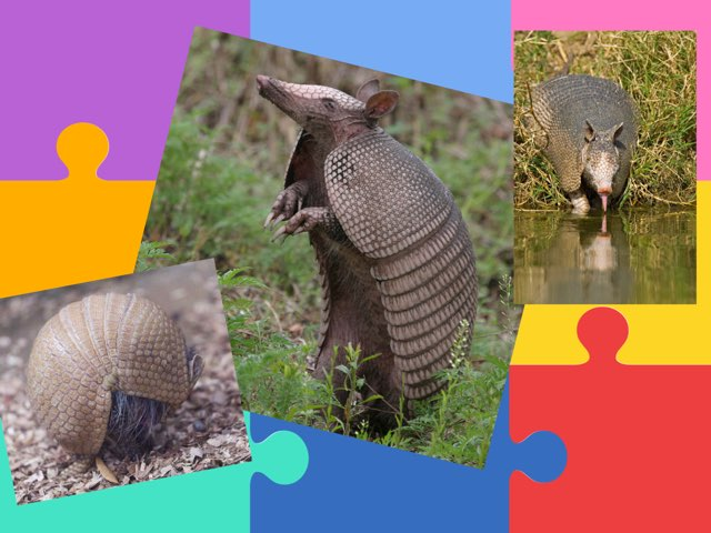 Armadillo Questions by Jean Porter