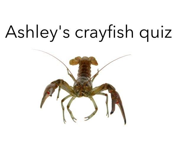 Ashley's Crayfish Quiz by Chris  Smith
