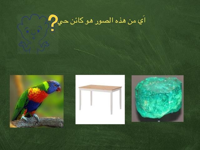 العلوم الصف الأول إبتدائي by علي الزهراني