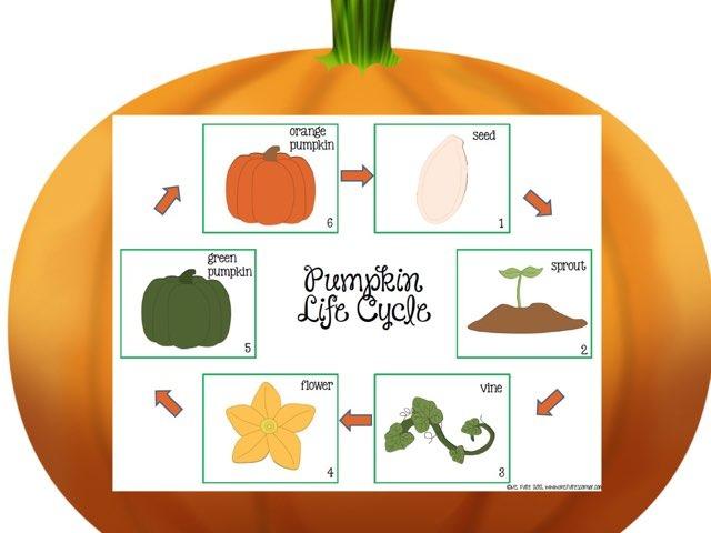 Pumpkin Life Cycle DPISD CE by Lauren Johnson