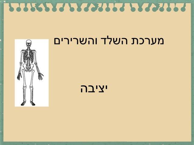 גוף האדם יציבה by מכללה תלפיות