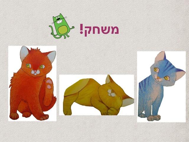 חתולים וארטיקים by Shira Bernstein