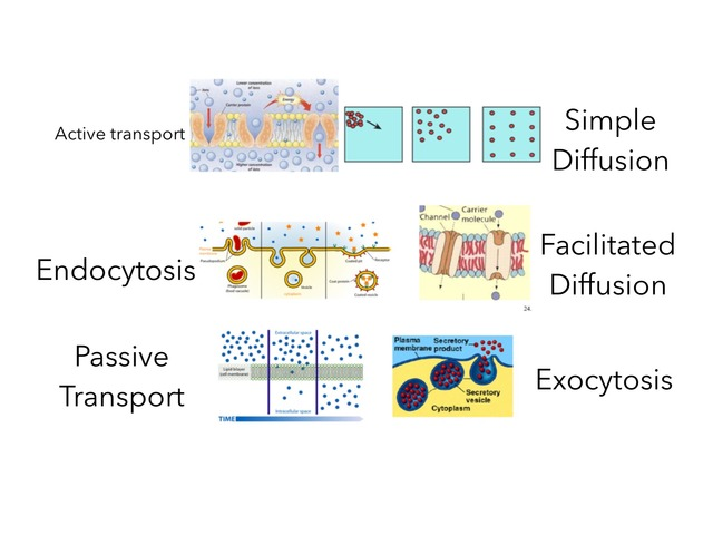 Cell Transport Practice by Brandis Willis