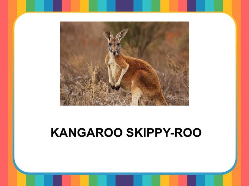 KANGAROO SKIPPY-ROO by Camila Dias